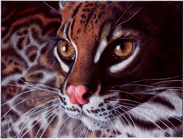 Leopard drawn by using ballpoint pen.